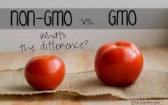 GMO vs. Non-GMO's