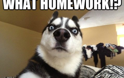 Homework Avoidance: The Top Ten Worst Excuses