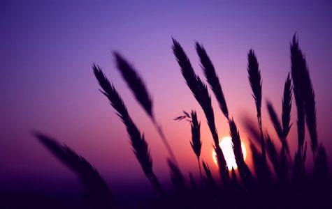 My Lilac Sky