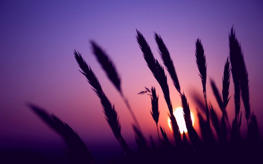 My+Lilac+Sky