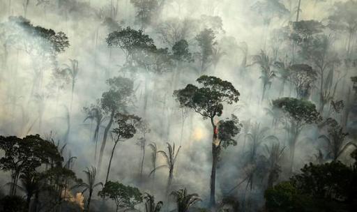 Rain Forest Fire Disrupts Global Habitats