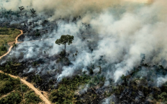 Amazon Fires and Climate Change