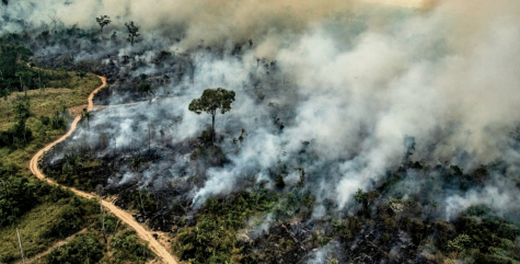 Rain Forest Fire Disrupts Global Habitats
