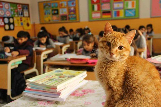 Classroom+Pets